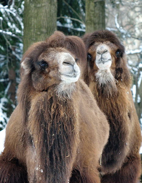 Cleveland Metroparks Zoo in the Winter