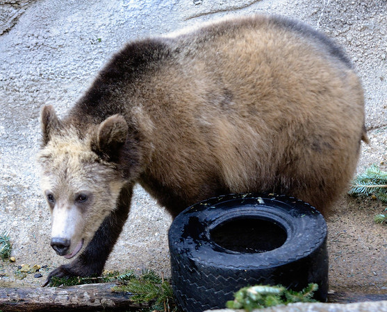 """Please """"Bear"""" with me, I have a flat tire, could someone please call AAA?  Thanks!"""