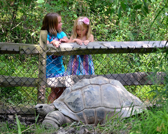 Tortoise - Cleveland Metroparks Zoo