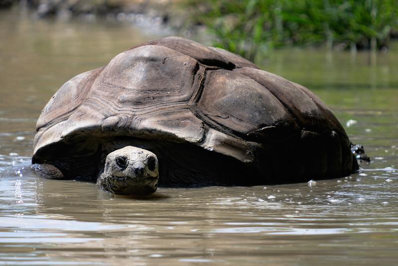 Tortoise - Cleveland Metroparks Zoo