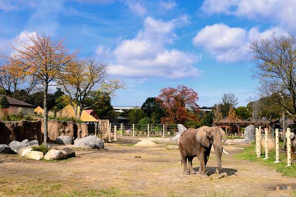 African Elephant Crossing - Cleveland Metroparks Zoo