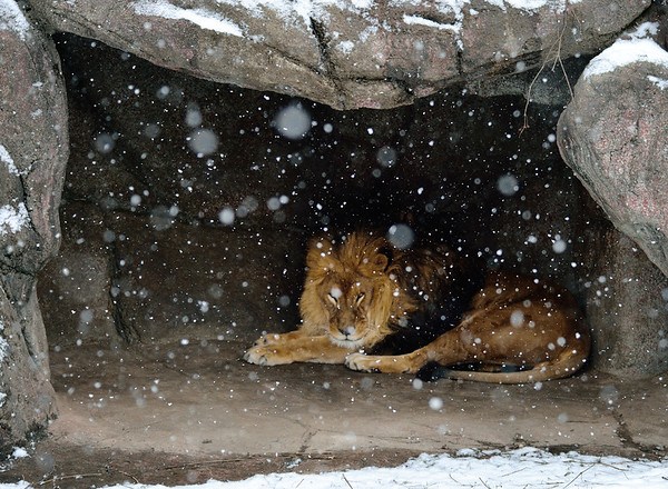 Cleveland Metroparks Zoo March 2013