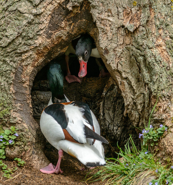 Duck Treehouse