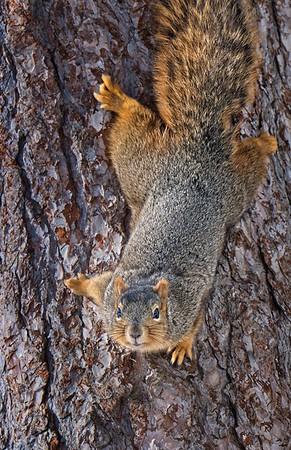Neighborhood Squirrels 2021