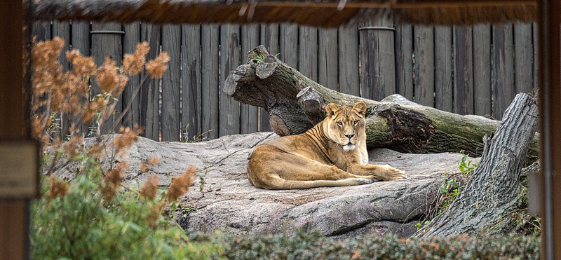 Novermber at the Cleveland Metroparks Zoo 2016