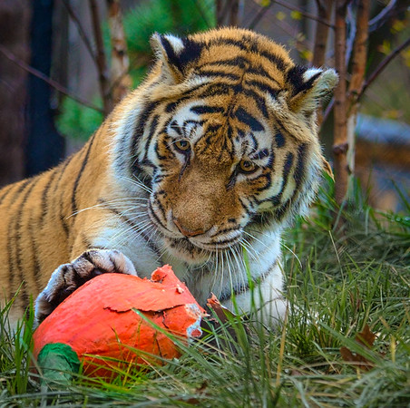Thanksgiving at the Cleveland Metroparks Zoo 2016