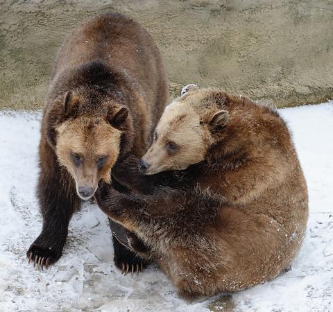 Wrestling Grizzlies