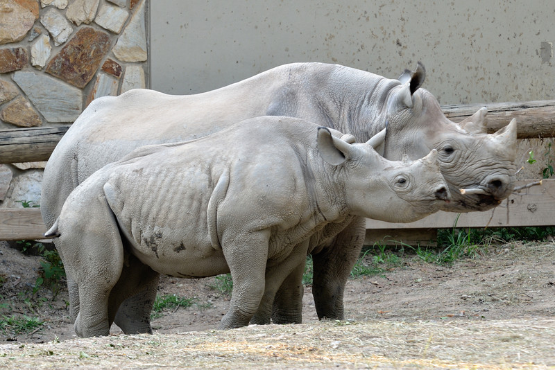 Rhino Family Profiles - Cleveland Metroparks Zoo