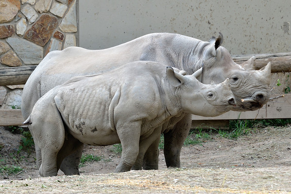 Rhino Family Profiles - Cleveland Metroparks Zoo