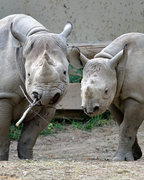 Rhino Family Portrait - Cleveland Metroparks Zoo