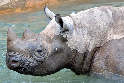 Going for a Swim - Cleveland Metroparks Zoo