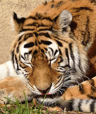 Cleveland Metroparks Zoo