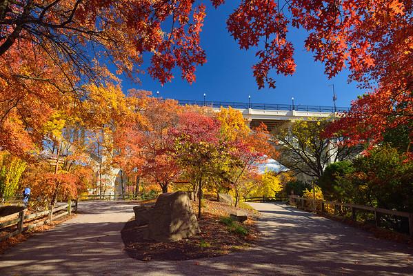 Northern Trek Fall Colors