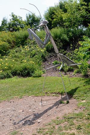 Praying Mantis and his Shadow - Pittsburgh Zoo