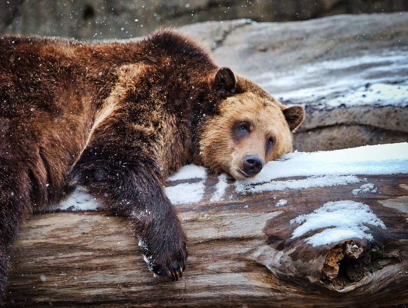 Thanksgiving 2014 at the Cleveland Metroparks Zoo