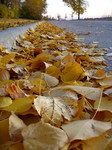 Fallen leaf path