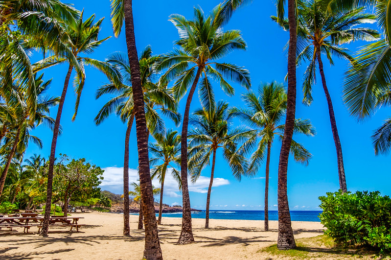 "Coconut Palm Trees on Hulopo""e Beach"