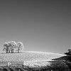 Trees On Frosty Hill