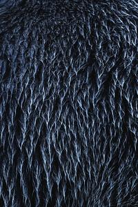 Abstract Bear Fur