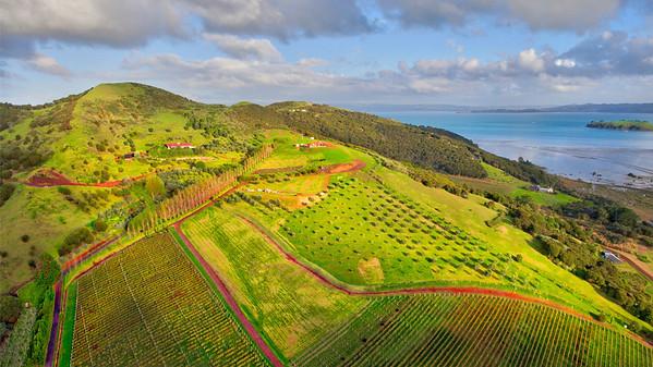 Over The Wine Fields Of Waiheke Island