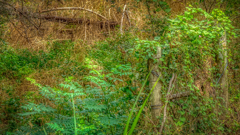 Abandoned_Fencing