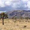 A Storm Brews Over the Desert