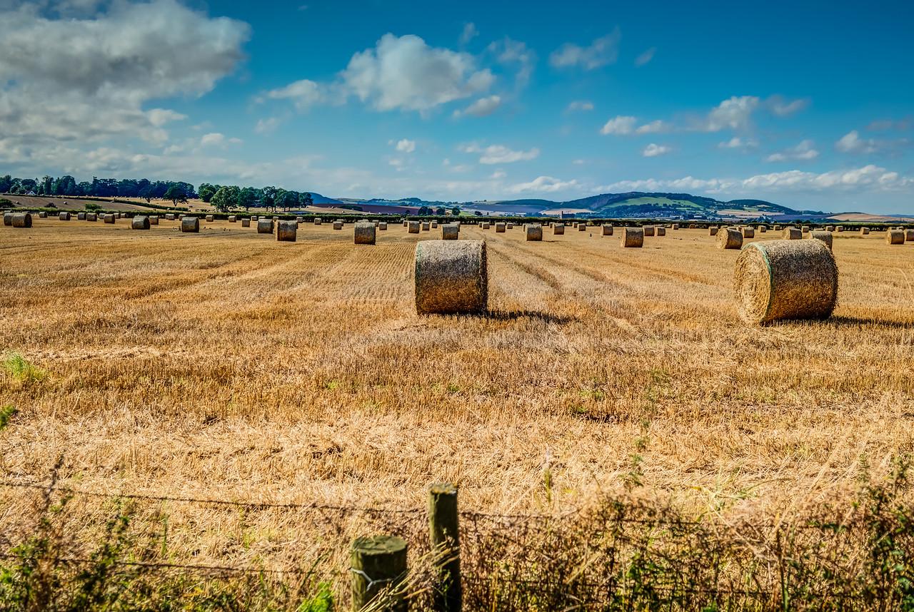 Scottish Hay