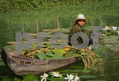 Cleaning the Lily Pond