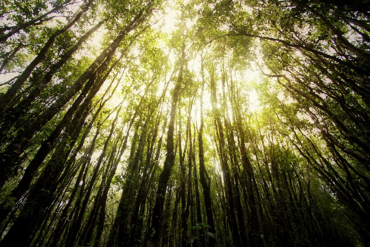 Franz Josef Forest