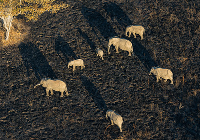 Elephants at dawn from a microlight