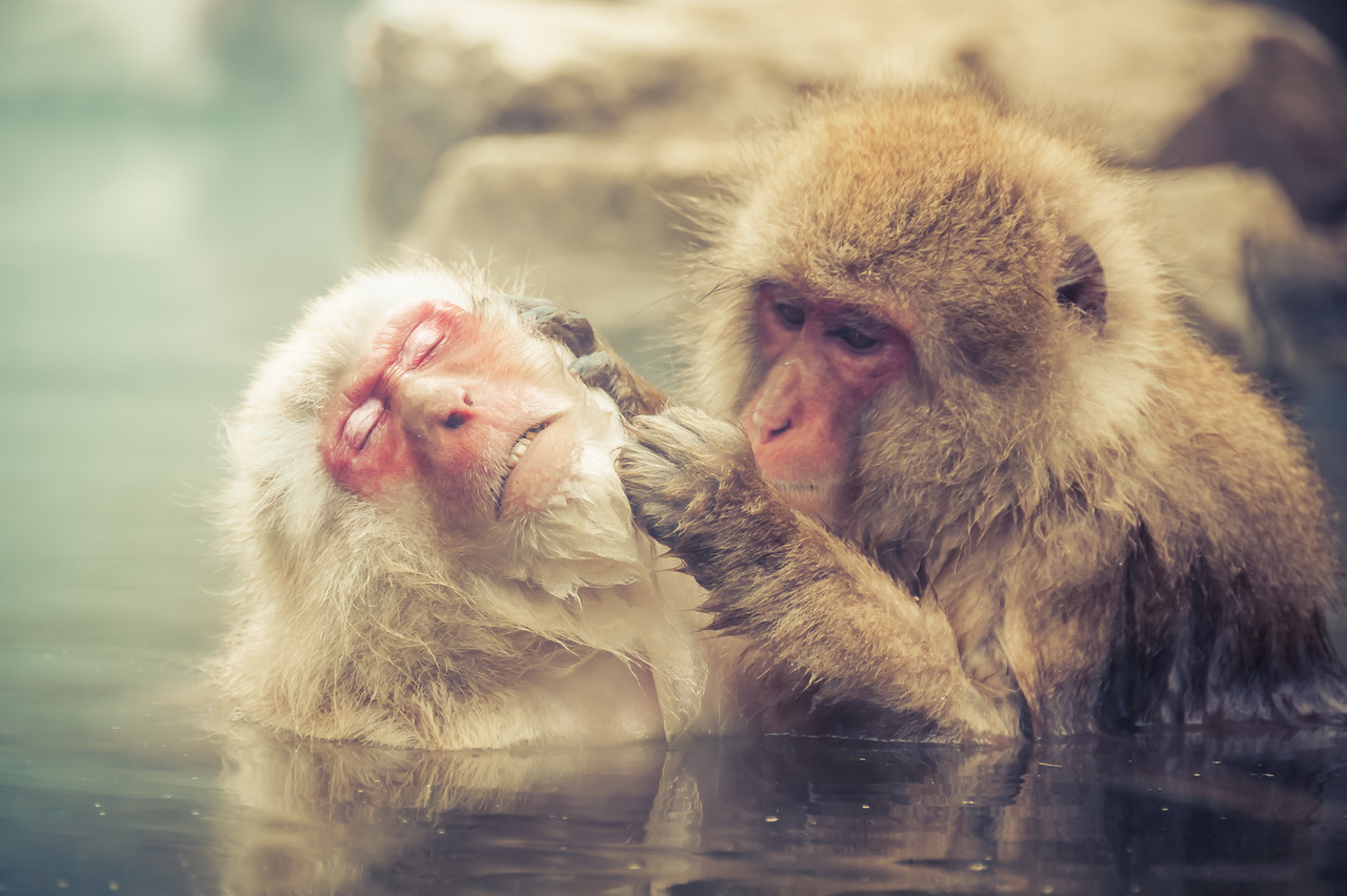 Monkeys in Their Leisure Time
