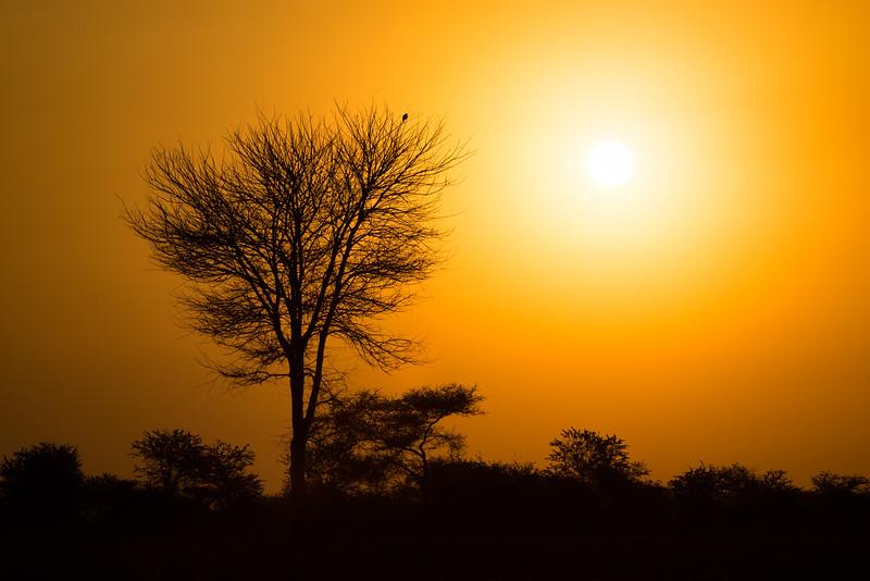 Sunrise in the Serengeti