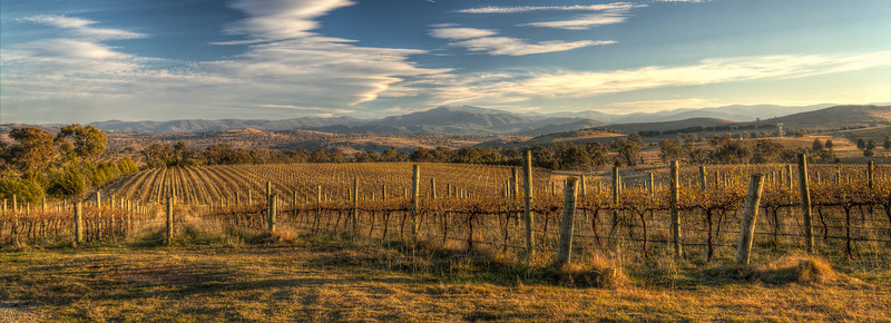 Canberra Vineyard