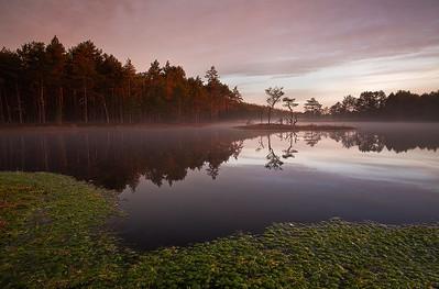 Summer in bog