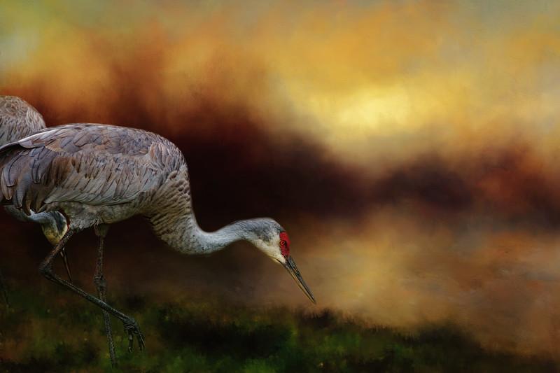 Sandhill Cranes - digital ar