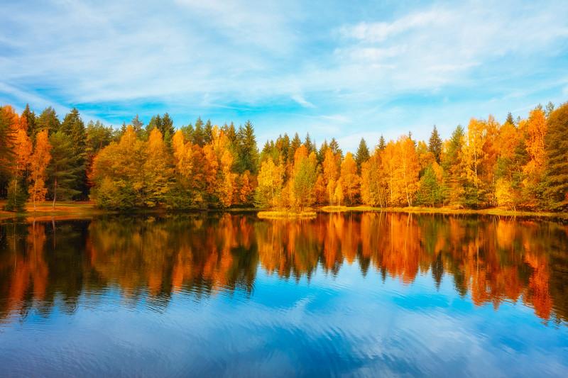 Autumn Leaves | Tridomi | Czechia