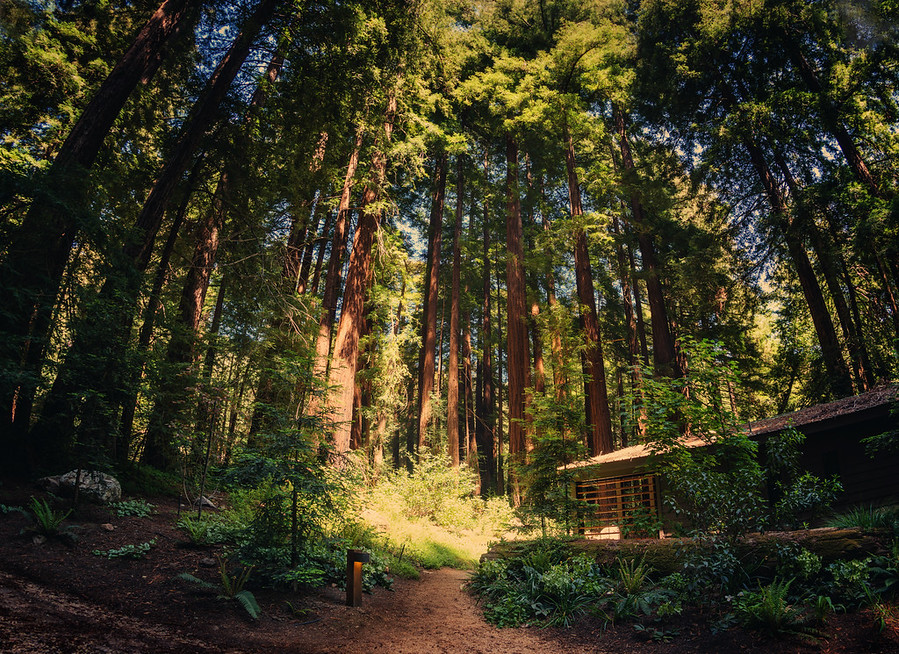 The Cabin in the Forest at the Glen Oaks Big Sur