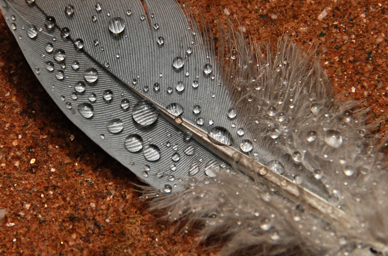Feather in the Rain