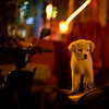 "<h2>Sad and Alone at Night</h2> <br/><br/>On one of my first evenings in Beijing, I walked around some of the older parts of the city to get a feel for it.  Whenever I have extra time in a city, I usually don't go too hardcore with the photography initially - choosing instead to explore on foot and get a sense of the place.  But, you know, I do have my camera with me to get a few things here and there...just can't help it.  Between a few streets, I came across this little guy sitting on the seat of a small motorcycle.<br/><br/> - Trey Ratcliff <br/><br/>Read more <a href=""http://www.stuckincustoms.com/2011/04/25/sad-and-alone-at-night/"">here</a> at stuckincustoms.com."