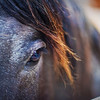 "<h2>The Gentle Eye of the Beast</h2> <br/>I gave a little impromptu workshop a few days ago.  I took a group of friends for the afternoon and we went out for an instructional photowalk, followed by a hardcore critique. <br/><br/>On the short walk, we visited a barn and a stable.  I gave assignments to people to all gather photos of the same subjects, find unique bits, and then submit a few photos for critique.  I've done this sort of thing many times before, and I'm always surprised at what I see ...<br/><br/> - Trey Ratcliff <br/><br/>Read the rest at the <a href=""http://www.stuckincustoms.com/2010/07/07/the-gentle-eye-of-the-beast/"">Stuck in Customs blog.</a>"