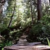 Wooden Path In The Forest - Tofino British Columbia Canada