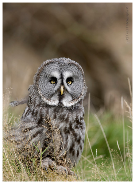 Georgia's owl