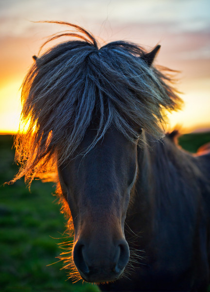 "<h2>The Horse of Sagas</h2> <br/>I was in the middle of a beautiful drive in Northern Iceland just past midnight.  The sun was about to dip below the horizon, and I was in the last hour of a five-hour sunset.  Unbelievable!  I passed a perfect grassy farm filled with perfect Icelandic horses ...<br/><br/>- Trey Ratcliff<br/><br/><a href=""http://www.stuckincustoms.com/2010/06/21/the-horse-of-sagas/"" rel=""nofollow"">Click here to read the rest of this post at the Stuck in Customs blog.</a>  Read the rest at the <a href=""http://www.stuckincustoms.com/2010/06/21/the-horse-of-sagas/"">Stuck in Customs blog.</a>"
