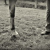Boots & Hooves - Picasa