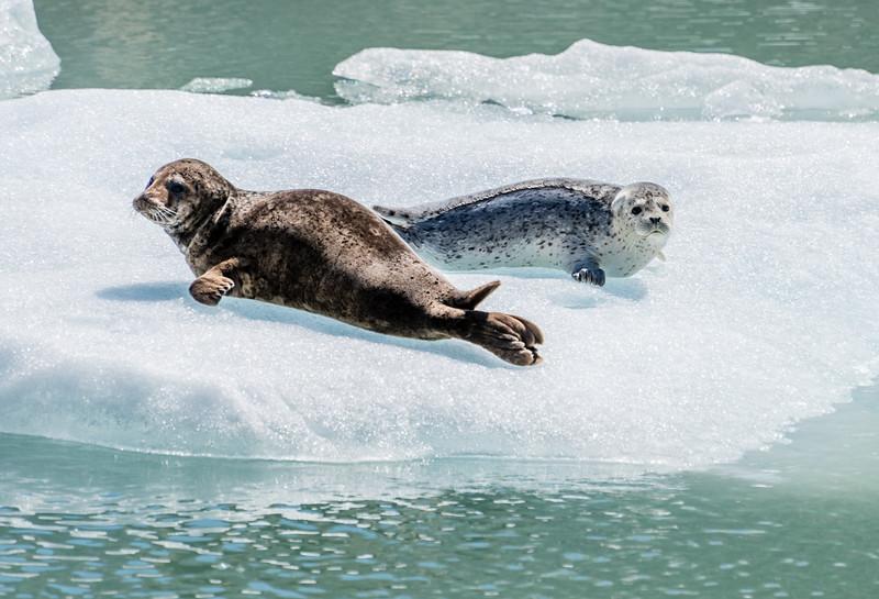 Curious Seals