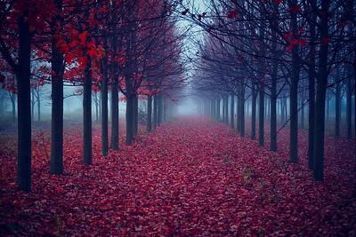 'Autumn Red Carpet' ~ Missouri