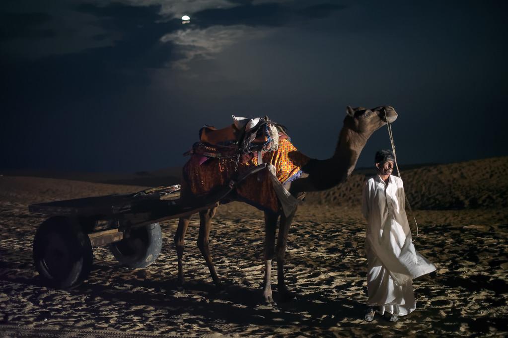 Camel in the desert under full moon