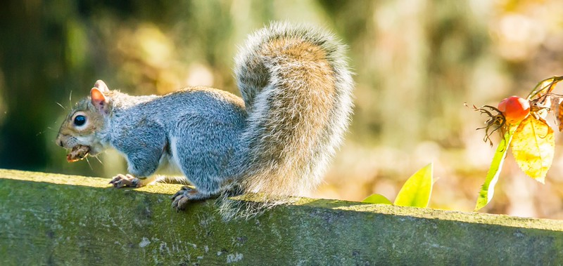 Squirrel in Barnby Dun
