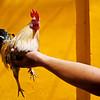 Rooster Sunday Saigon Vietnam