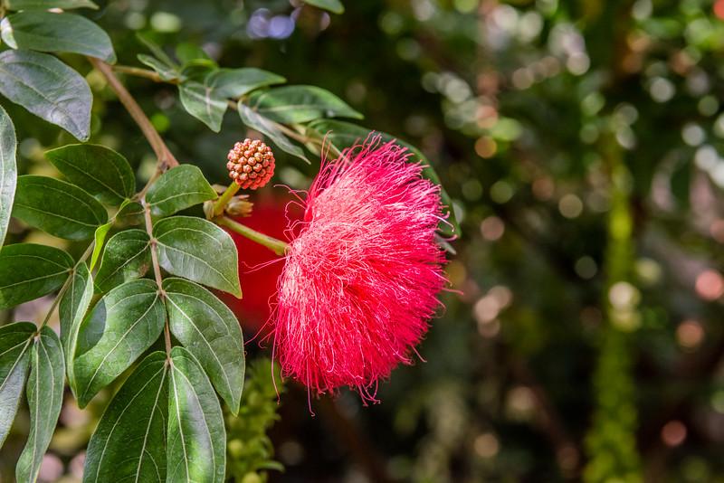 Red Fuzzy Flower